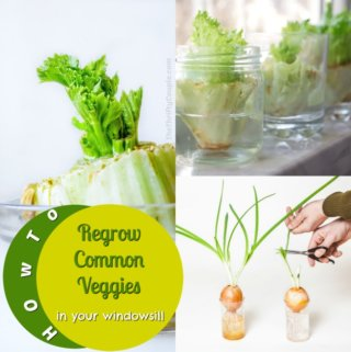 How to Regrow Veggies in Water from Veggie Scraps