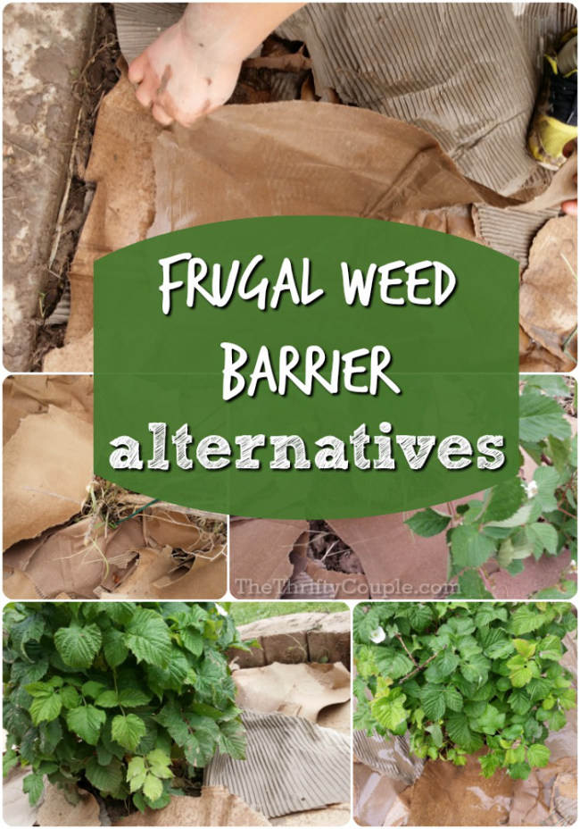 frugal-weed-barrier-alternatives-diy-ideas