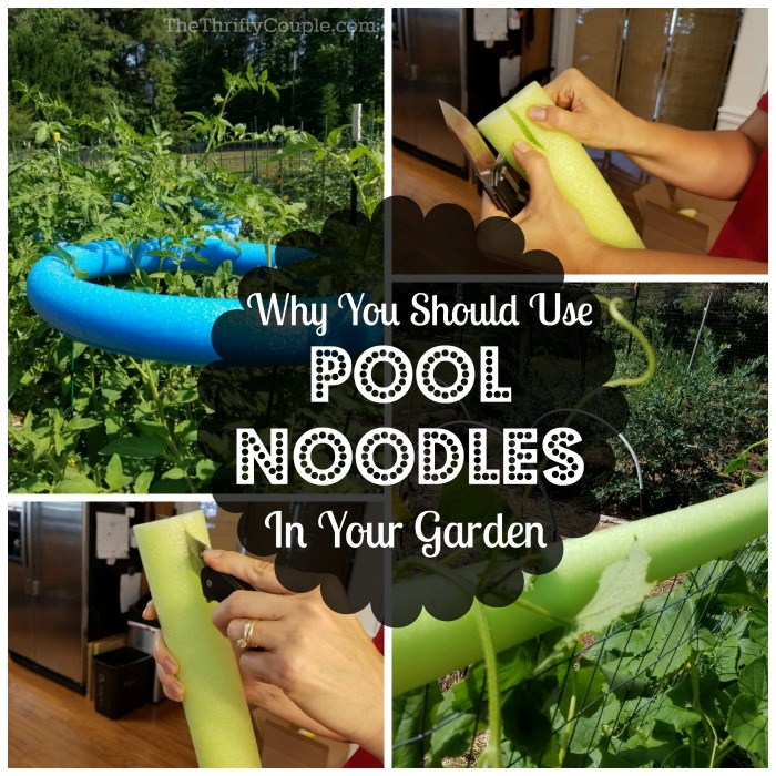 Why You Should Use Pool Noodles In Your Garden (Pool Noodle Gardening Hacks)