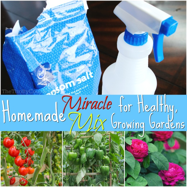 homemade-epsom-salt-miracle-mix-for-gardens-recipe